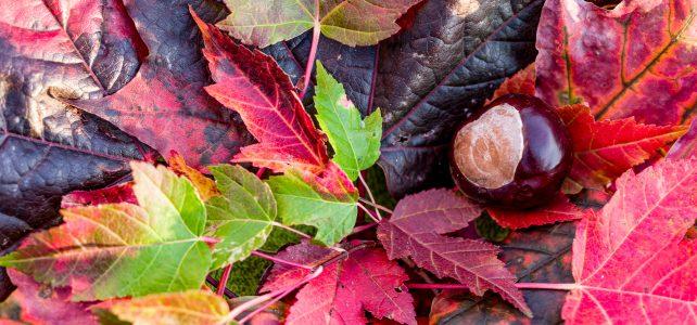 Reise ins Blaue im goldenen Herbst